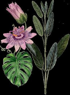 doctor-soil-plant